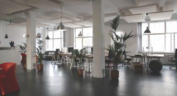 Tanaman Dekorasi Ideal untuk Indoor