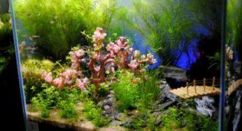 Aquarium Mini Portable Terbaik Yang Mudah Dirawat